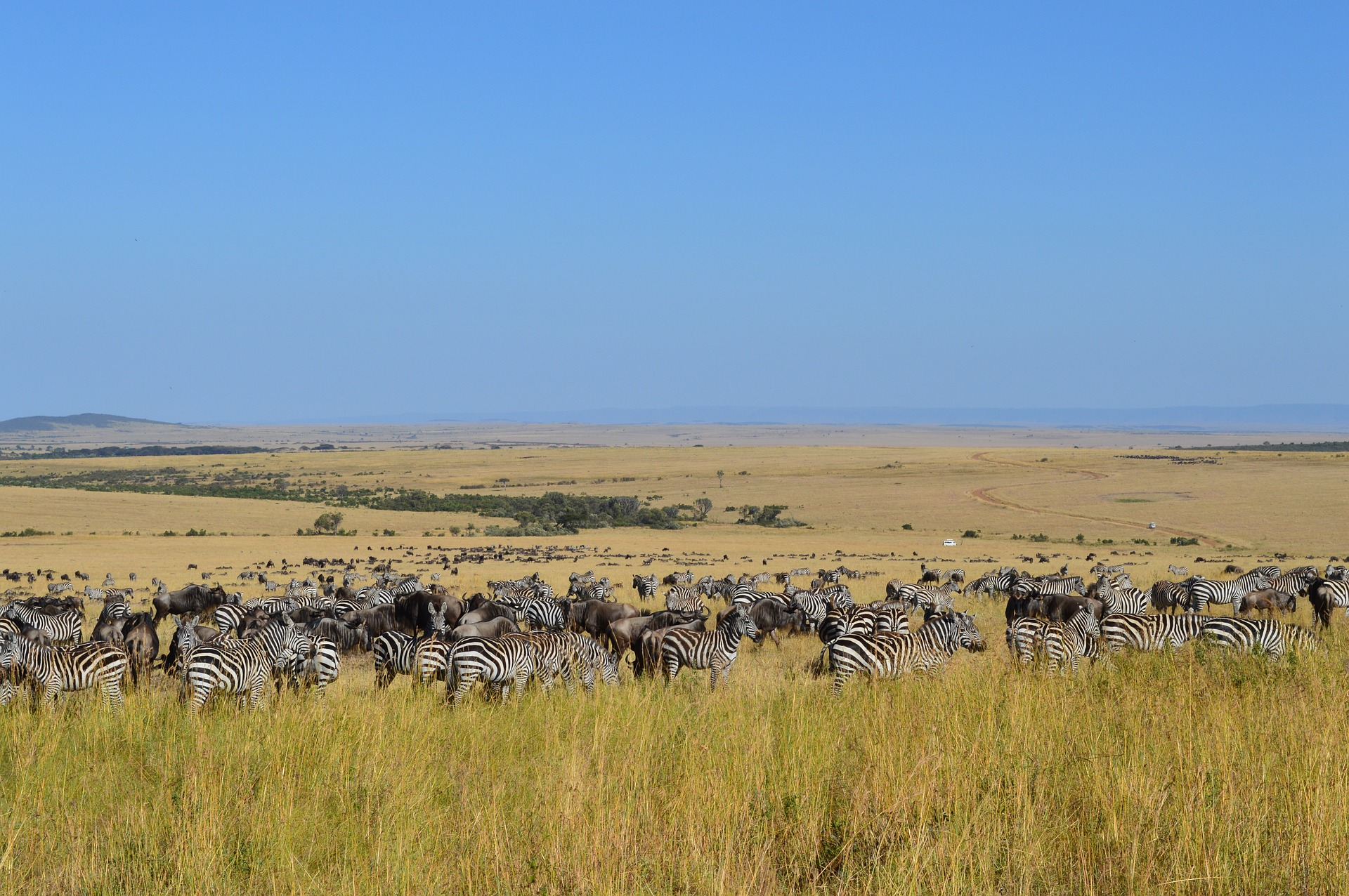 A Short Kenya Safari Holiday