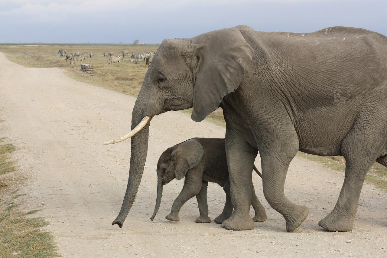 Garden Route Tour with Addo Elephant Safari