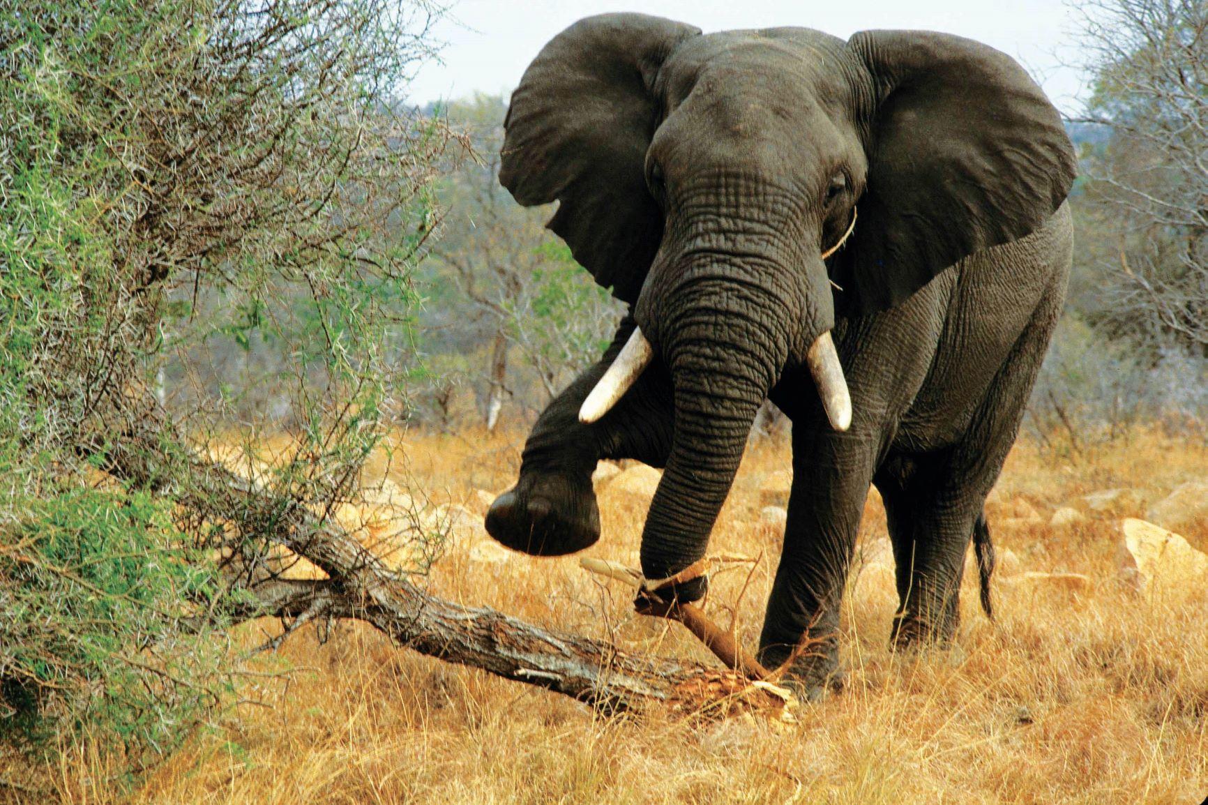 Durban With Wildlife