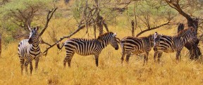 Kenya and Tanzania Tour Packages