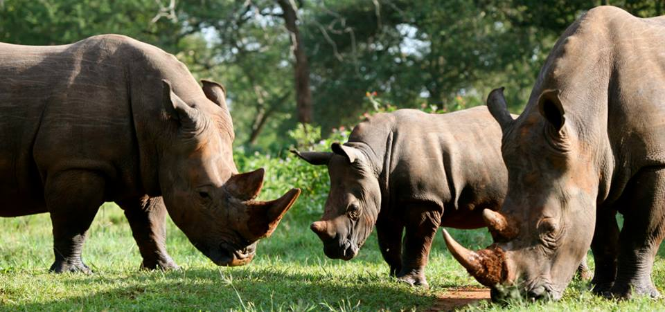 Uganda Safari with Rhino Trekking