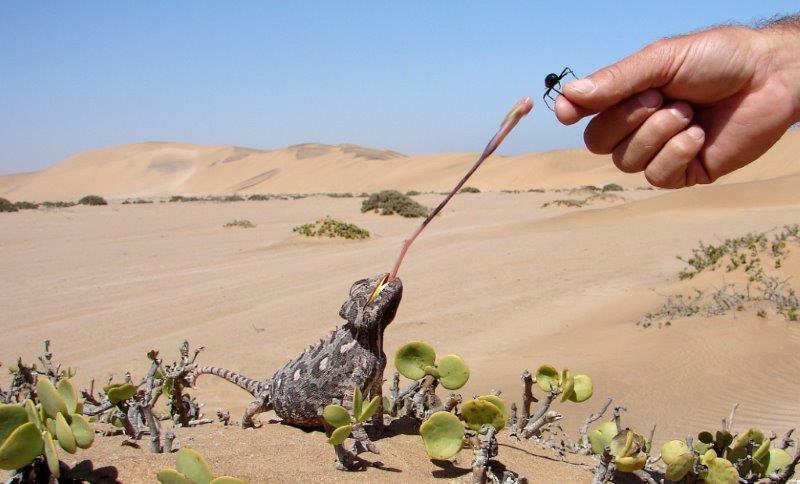 The desert life of Swakopmund