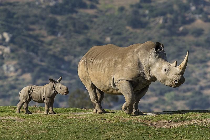 Rhinoceros Sanctuary