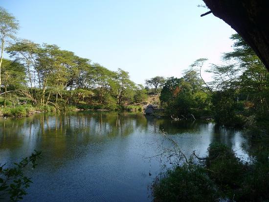 Mzima Springs (Tsavo West)