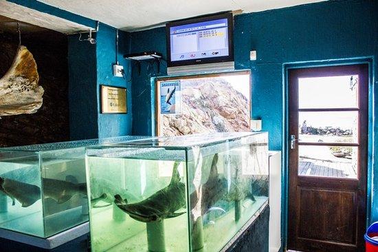 The Shark Lab