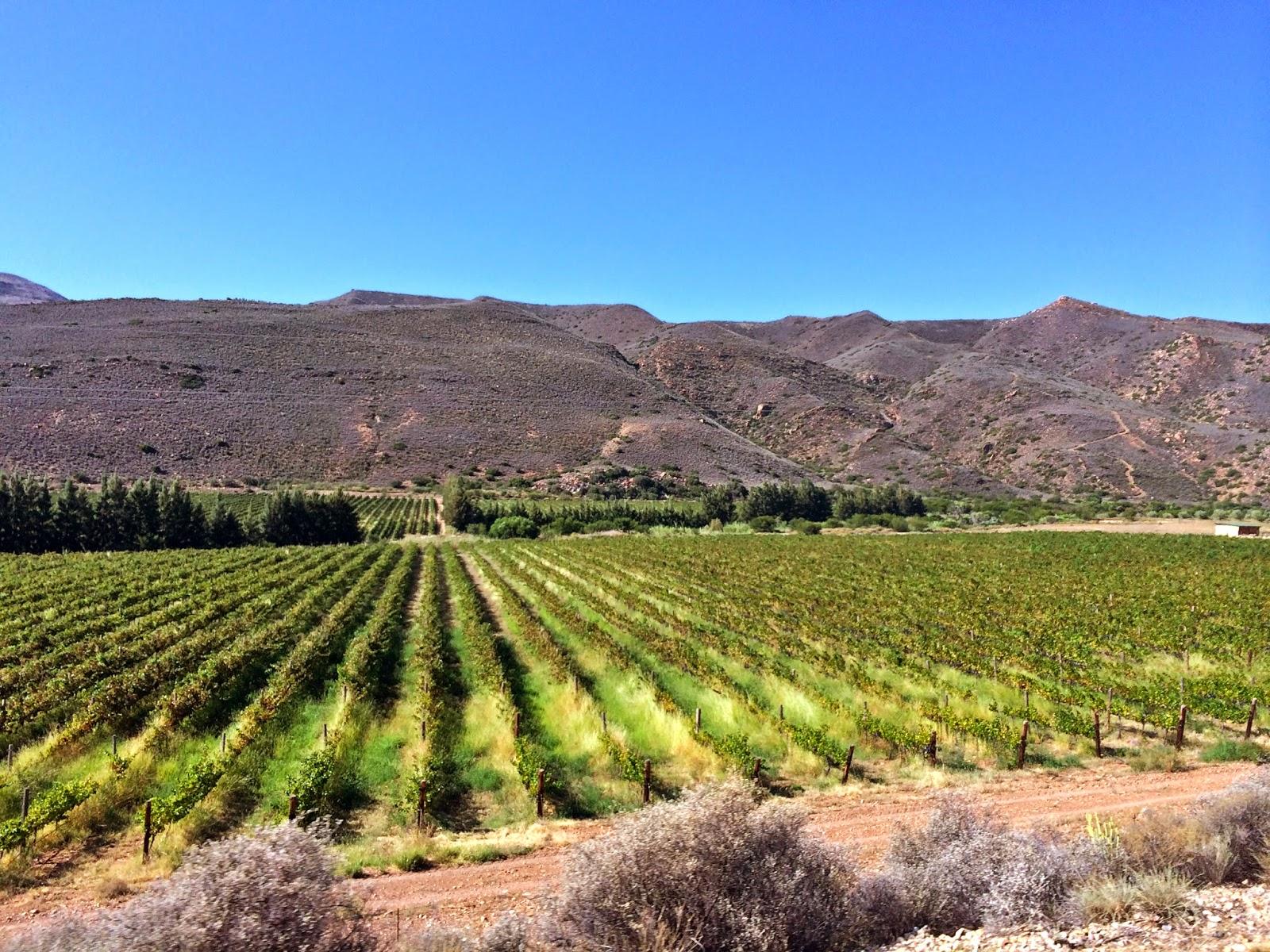 Klein Karoo Wine Route
