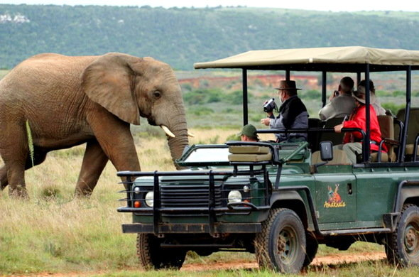 Safari Tour near Tsitsikamma