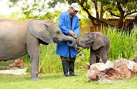 Wild Is Life Grand Zimbabwe