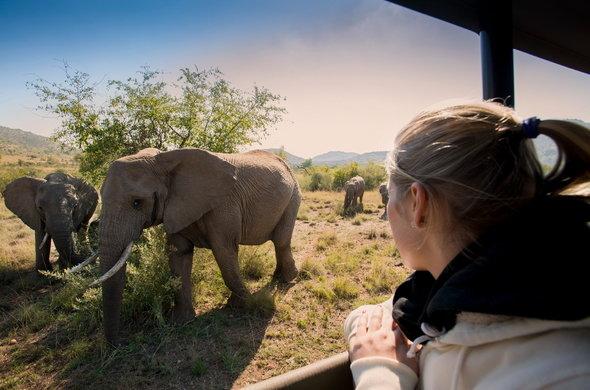 Wildlife tour to Pilanesberg from Sun City