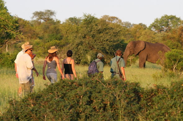 Walking Safari tour In Kruger