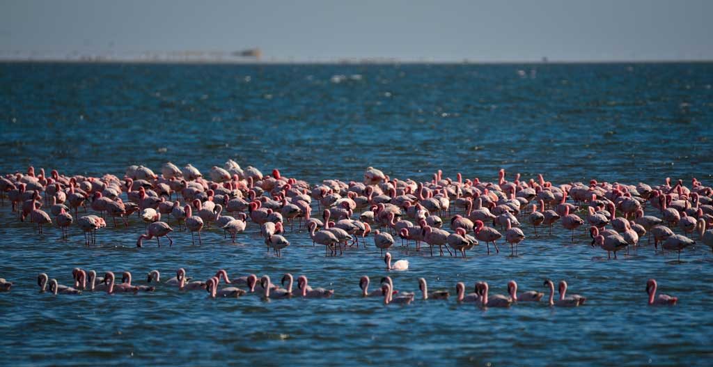 Birdwatching at the Walvis Bay