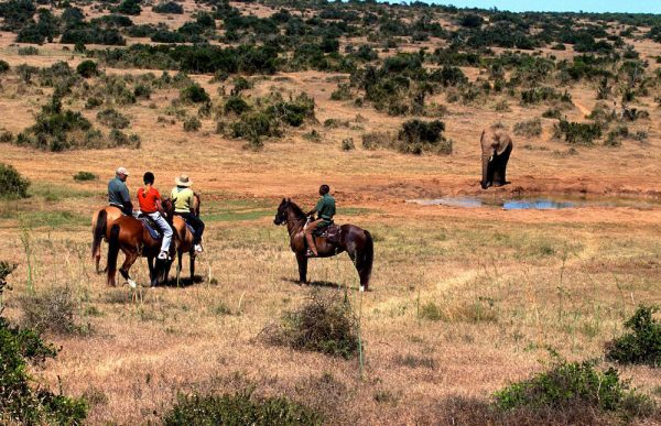 The Horse Riding Tours at Addo