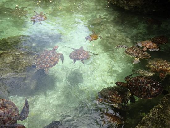 Mnarani Marine Turtle Conservation Pond