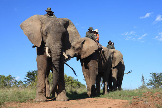 Walk with the elephant at Addo Elephant Park