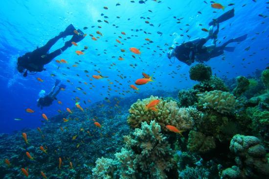 Praslin Scuba Diving