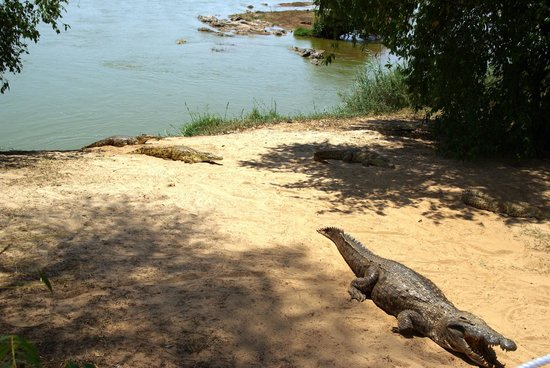 Tracking the crocs