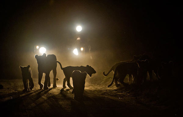 Enjoy day and night game drives