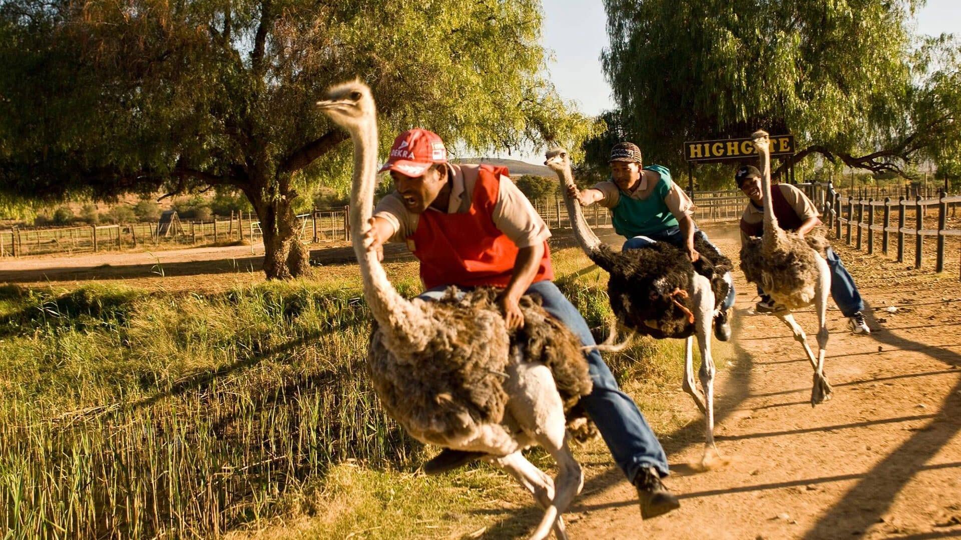 Ostrich Farm show
