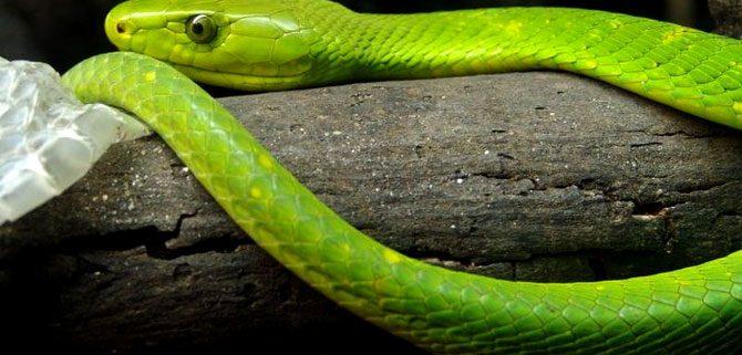 Explore Meserani Snake Park