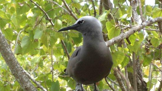 Ile Aux Cocos – The Bird Sanctuary