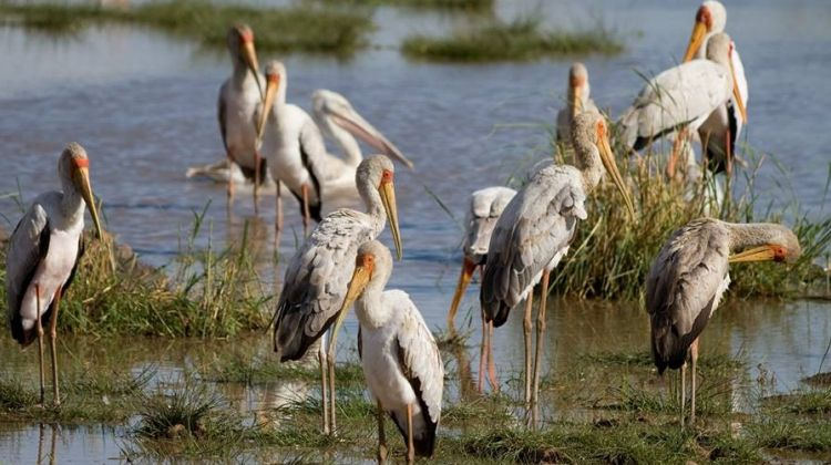Bird watching in Lake Eyasi
