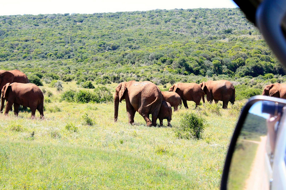 Photography Tour at Addo