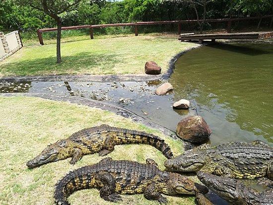 Visit Zulu Croc Reptile Park