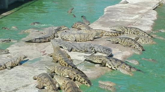 The wildlife tour at Le Bonheur Crocodile Farm
