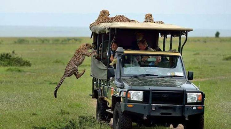 The Masai Mara Game Drive