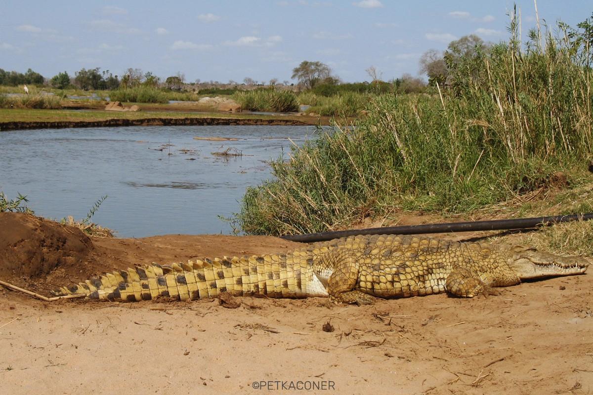 Crocodile Point (Tsavo East)