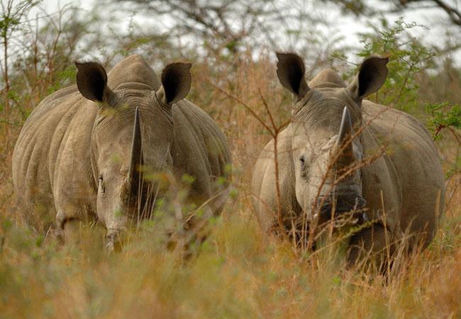 AmaZulu Game Reserve