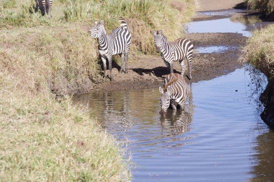 Musiara Swamp