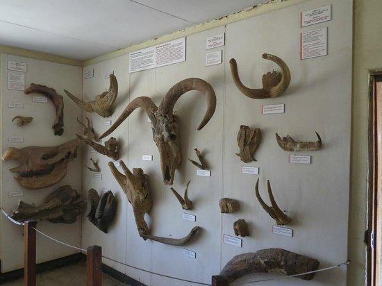 Visit Oldupai Museum